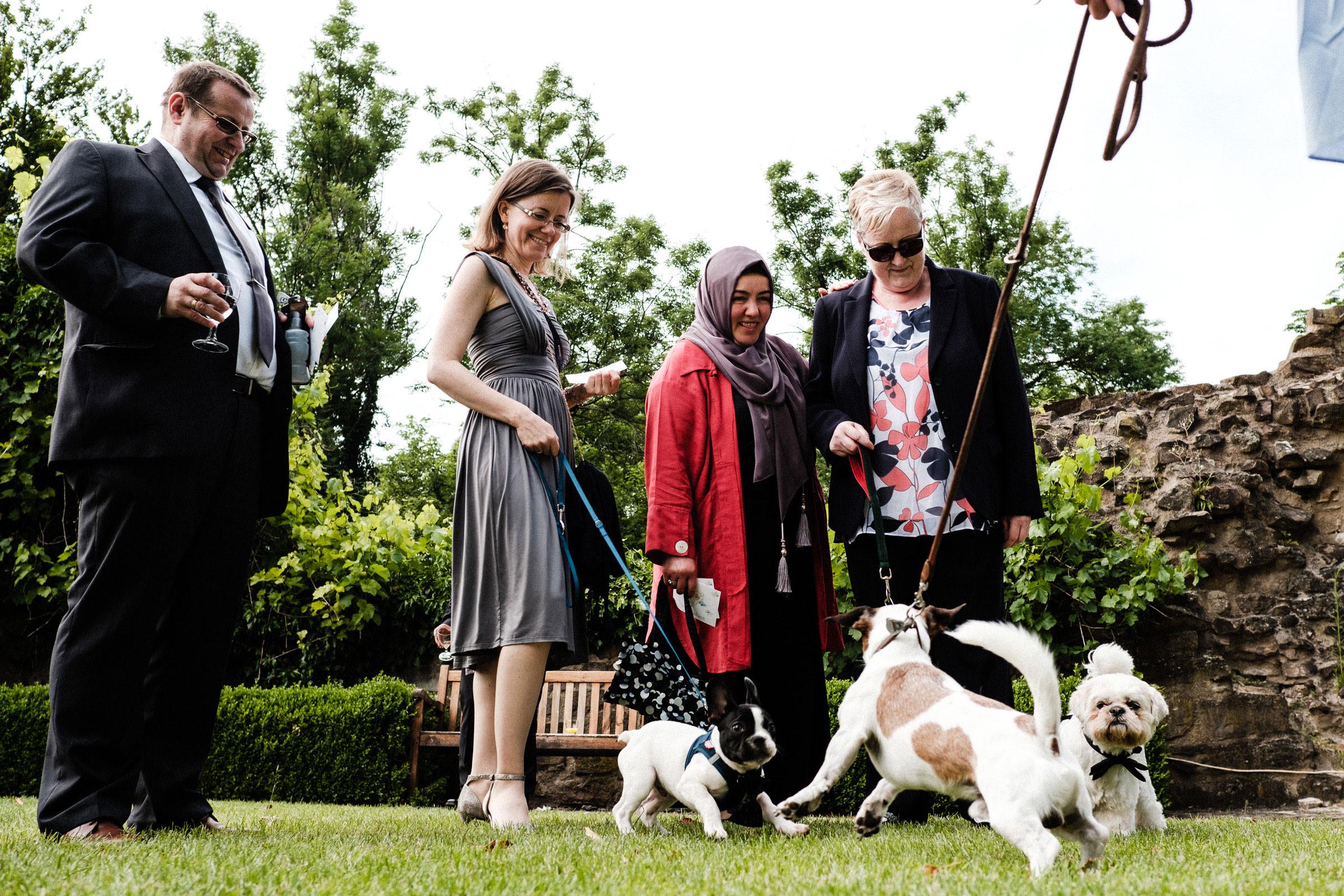 Hunde auf der Hochzeitsfeier in Göttingen